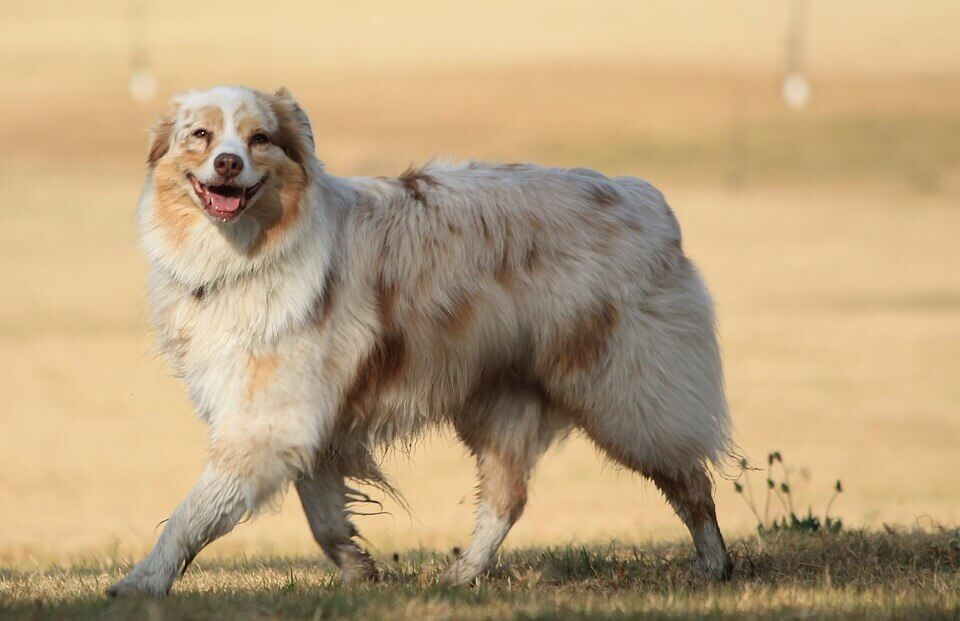 A dog smiling in a park