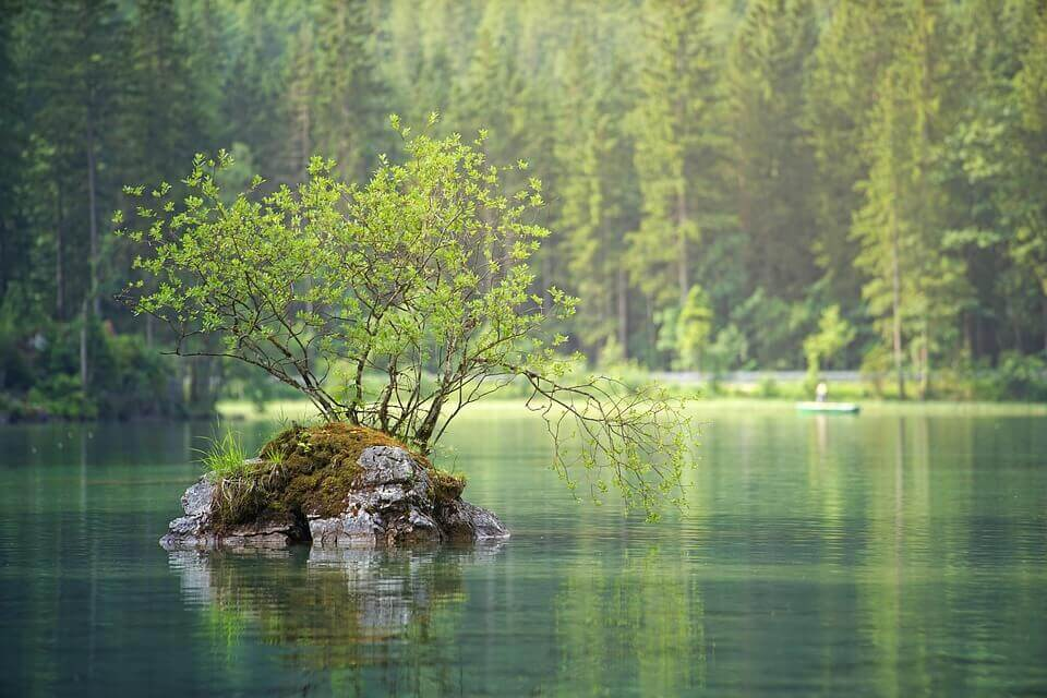 An image of a lake and the forest.